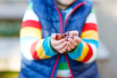 Little blond kid playing with chestnuts in autumn park. Stock Photography