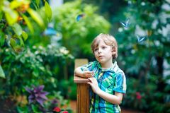 Little blond preschool kid boy discovering flowers and butterflies at botanic garden. Fascinated school child interested in biology. Active educational leisure royalty free stock image