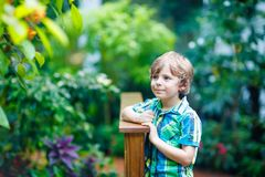 Little blond preschool kid boy discovering flowers and butterflies at botanic garden. Schoolchild interested in biology. Active educational leisure with kids stock photo