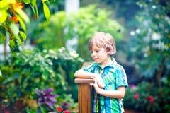 Little blond preschool kid boy discovering plants, flowers and butterflies at botanic garden stock image