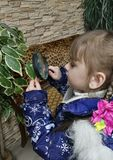 Little girl examining the tree leaves through the magnifying glass stock image
