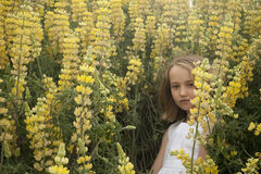 Little blonde girl in yellow lupines Royalty Free Stock Image