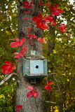 Little Blue Bird House Surrounded by Red Fall Leaves Royalty Free Stock Images