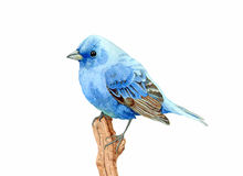 Little Blue Bird. I love birds and nature. I made with water color painting Stock Image