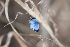 Little blue butterfly sitting on a branch. In the spring stock photo