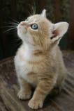 Little blue eyes Royalty Free Stock Image