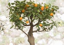 Little bonsai in the garden Royalty Free Stock Photo