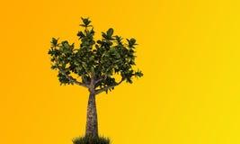 Little bonsai Royalty Free Stock Photo