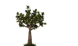 Little bonsai Royalty Free Stock Photos