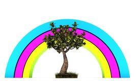 Little bonsai Stock Photo
