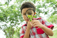 Little botanist Stock Images