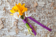Little bouquet with fresh crocus Stock Photography