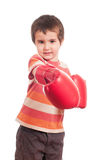 Little boxer attack Stock Image