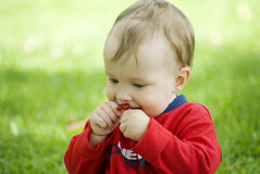 Little boy. The little  boy outdoors eating red currants Stock Image