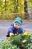 Little boy. Looking at flowers that grow in a flowerbed Royalty Free Stock Image