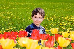 Little boy against tulips and dandelions Royalty Free Stock Images