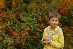 Little Boy And Rowan Stock Photo