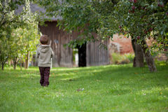 Little boy in an apple garden Stock Images