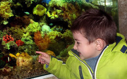Little boy in the aquarium Stock Image