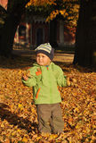 Little boy with autumn leaves Stock Photos