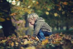 Little boy and autumn leaves Stock Image