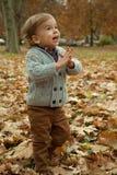 Little boy in autumn leaves Stock Photos