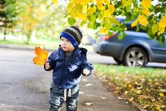 Little boy with autumn maple leaves Royalty Free Stock Photography