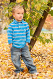 Little boy in autumn park. Royalty Free Stock Photo