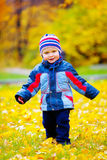 Little boy in the autumn park Stock Image