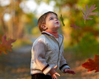 Little boy in autumn park Royalty Free Stock Photos