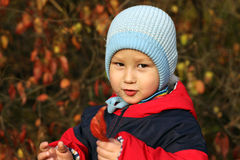 Little boy in autumn park Royalty Free Stock Image