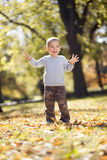 Little boy at the autumn park royalty free stock photography