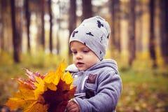 Little boy in autumn park Stock Photos
