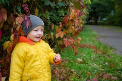 Little boy in the autumn park stock images