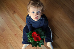 Little Boy avec des marguerites de Gerbera Photos stock