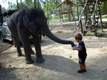 A little boy and a baby elefant in Thailand.. A Little boy is feeding a baby elefant with bananas.. nice and gently .. they can be friends royalty free stock images