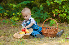 Little boy with a basket of apples in the park Stock Photo