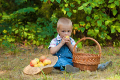 Little boy with a basket of apples in the park Royalty Free Stock Photography