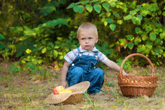 Little boy with a basket of apples in the park Stock Photography
