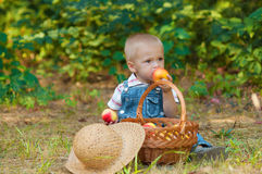 Little boy with a basket of apples in the park Stock Image