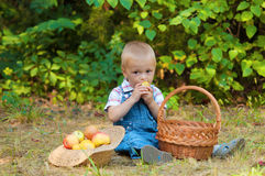 Little boy with a basket of apples in the park Royalty Free Stock Image