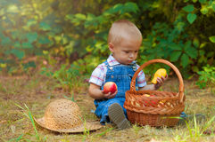 Little boy with a basket of apples in the park Stock Images