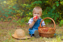 Little boy with a basket of apples in the park Royalty Free Stock Photo
