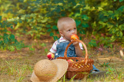 Little boy with a basket of apples in the park Royalty Free Stock Images