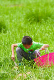 A little boy with a basket on the grass Royalty Free Stock Images
