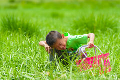 A little boy with a basket on the grass Stock Image