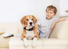 Little boy with beagle on the white sofa Stock Photos