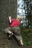 Little boy behind a tree. Little boy playing hide and seek stock image