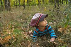 Little boy with big cap in autumn park Stock Photography