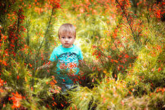 A little boy among big flowers Royalty Free Stock Image